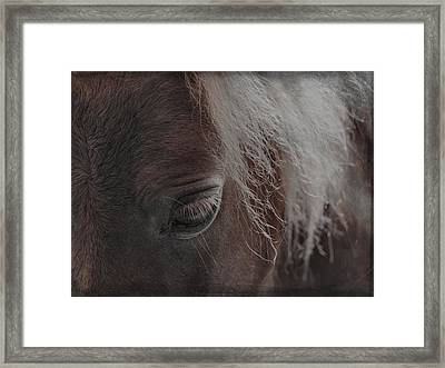Thoughts Of Horse Framed Print
