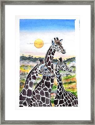 Three Giraffes    Sold Framed Print
