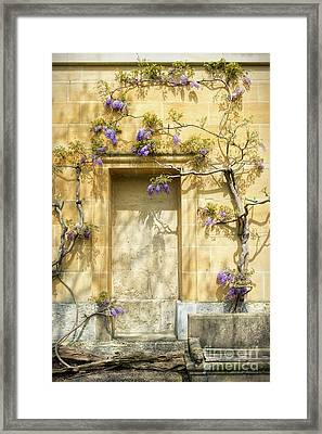 Threads Of Wisteria Framed Print by Tim Gainey