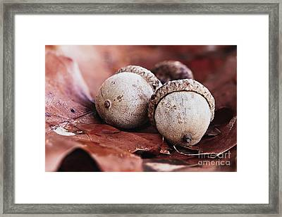 Framed Print featuring the photograph Three Acorns And Autumn Oak Leaves by Stephanie Frey