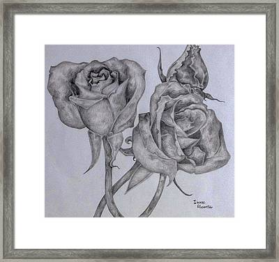 Three American Beaties  Framed Print
