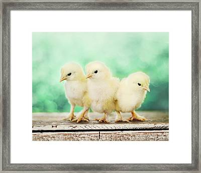 Three Amigos Framed Print by Amy Tyler