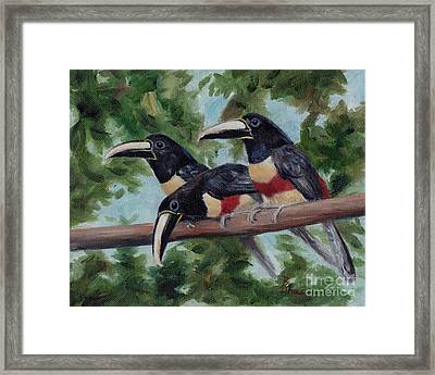 Three Amigo's Framed Print