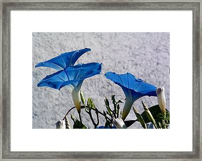 Three Amigos Framed Print by john Kuti
