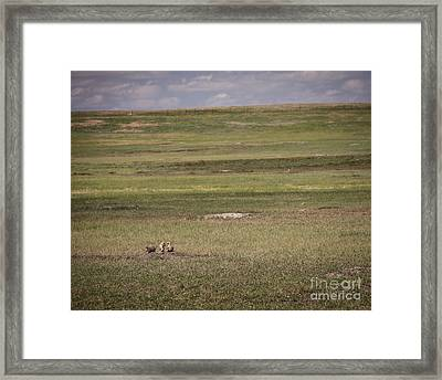 Three Amigos Framed Print by Sandy Adams