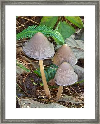 Framed Print featuring the photograph Three by Angi Parks