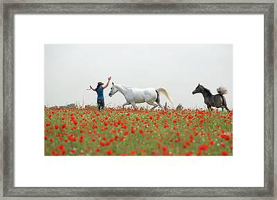 Three At The Poppies' Field Framed Print by Dubi Roman