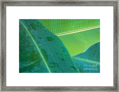 Three Banana Leaves Framed Print by Dana Edmunds - Printscapes