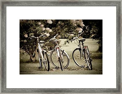 Three Bicycles Framed Print by Maggie Terlecki