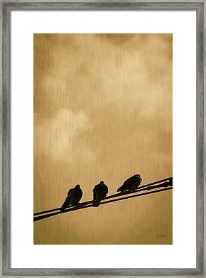 Three Birds On A Wire Framed Print by Dave Gordon