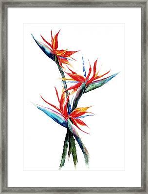 Three Birds Framed Print by Suzanne Krueger