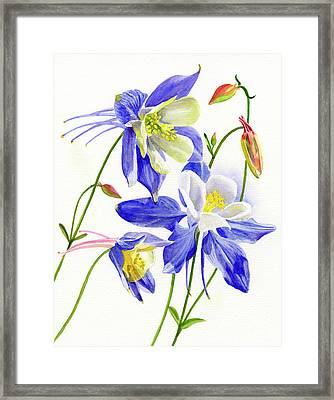 Three Blue Columbine Blossoms Framed Print by Sharon Freeman