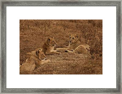 Three Brothers Framed Print by Miranda  Miranda