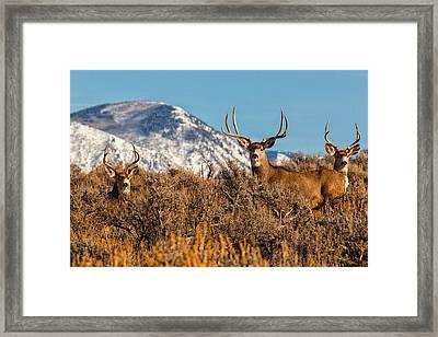 Three Bucks Crown  Framed Print