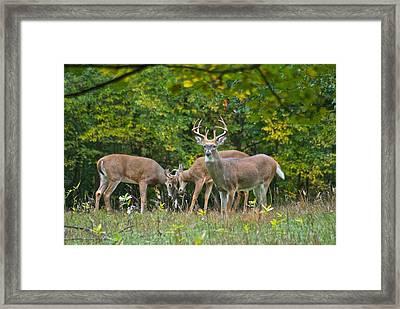 Three Bucks_0054_4463 Framed Print