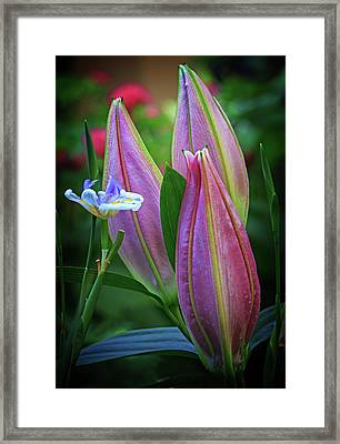 Framed Print featuring the photograph Three Buds by Robert Pilkington