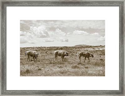 Framed Print featuring the photograph Three Buffalo Calves by Rebecca Margraf