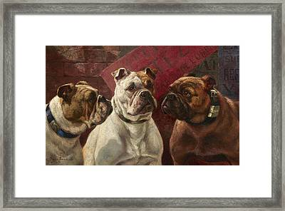 Three Bulldogs Framed Print by Charles Boland