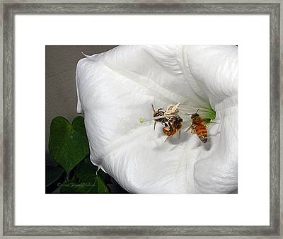 Framed Print featuring the photograph Three Busy Bees by Joyce Dickens