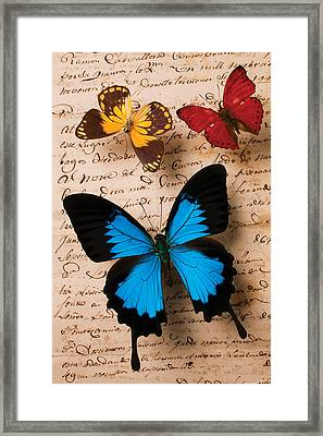 Three Butterflies Framed Print by Garry Gay