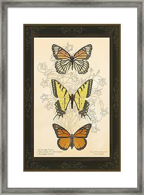Three Butterflies Framed Print