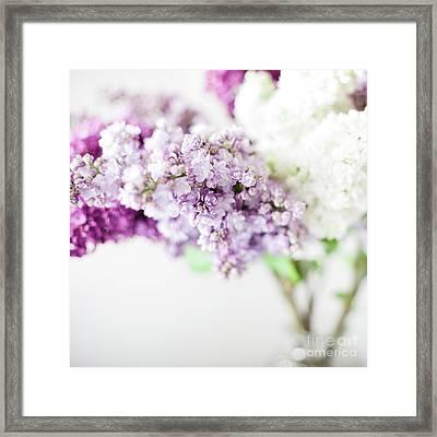Three Colours Of Lilac Blossom By Svetlana Imagineisle Framed Print