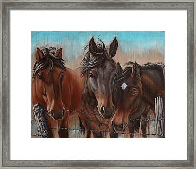 Three Curious Friends Framed Print