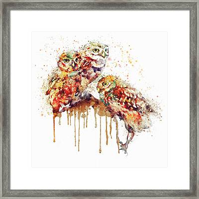Three Cute Owls Watercolor Framed Print
