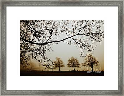 Framed Print featuring the photograph Three Cypress In The Mist by Iris Greenwell