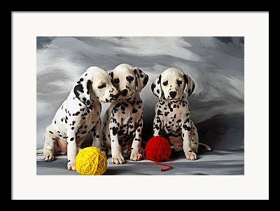 Young Pedigree Canine Domestic Domesticated Purebred Purebreed Breed Framed Prints