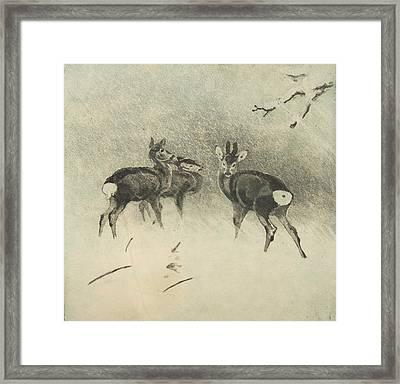 Three Deer In A Snowstorm Framed Print by Lolek