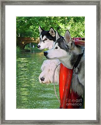 Three Dogs On A Boat Framed Print by Terri Waters