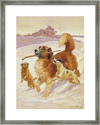 Three Dogs Playing In The Snow Framed Print