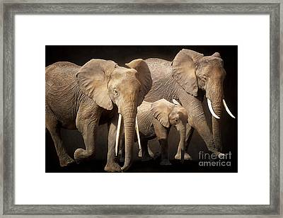 Three Elephants Framed Print by Angela Doelling AD DESIGN Photo and PhotoArt