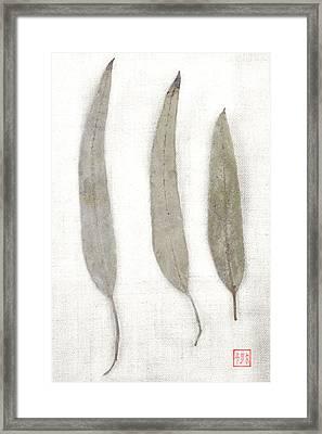 Three Eucalyptus Leaves Framed Print by Carol Leigh