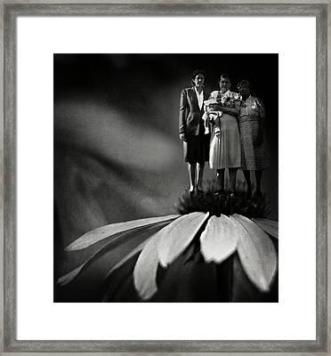 Three Fairy Godmothers  Framed Print by Rebecca Sherman