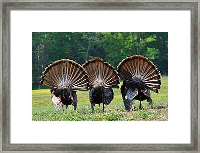 Three Fans Framed Print by Todd Hostetter