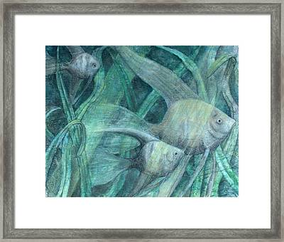 Three Fish Framed Print by Sandy Clift