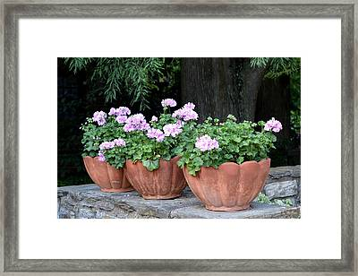 Framed Print featuring the photograph Three Flower Pots by Deborah  Crew-Johnson