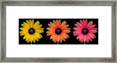 Three Flowers Framed Print by Hudson Marsh