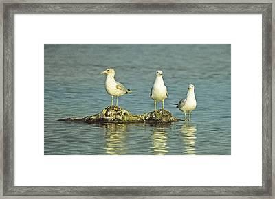 Three Friends Framed Print by Bruce Gilbert
