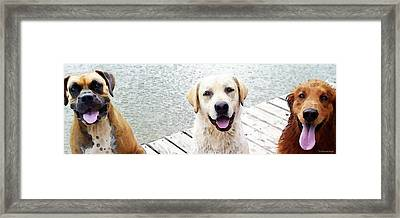 Three Friends Framed Print by Sharon Cummings