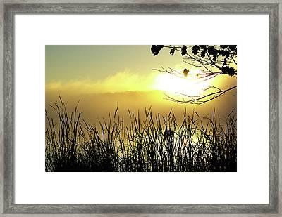 Three Geese At Sunrise Framed Print