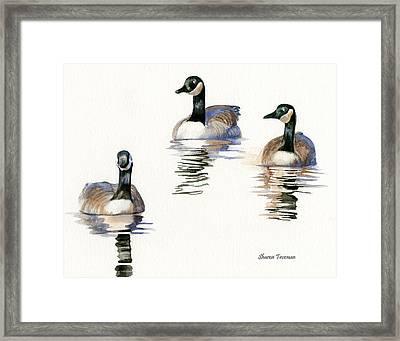 Three Geese With Black Necks Framed Print by Sharon Freeman