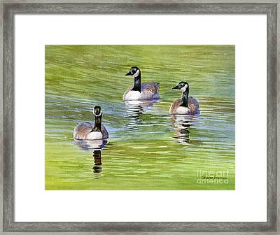 Three Geese With Pond Reflections Framed Print