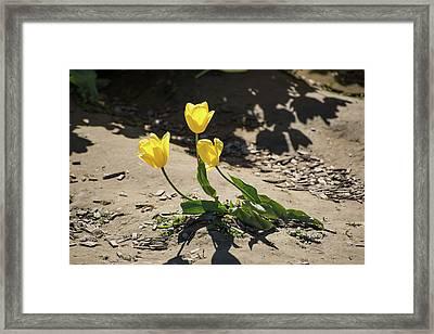 Three Gold Memories Framed Print