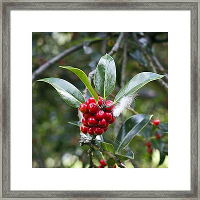 Three Happy Leaves Among Red Berries Framed Print by Helga Novelli