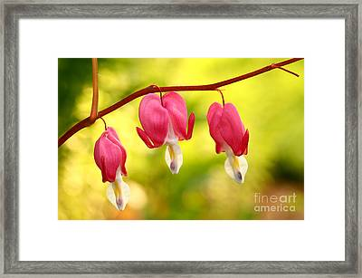Three Hearts Framed Print