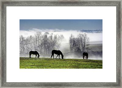 Three Horse Morning Framed Print