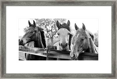 Three Horses Framed Print by Brian Foxx